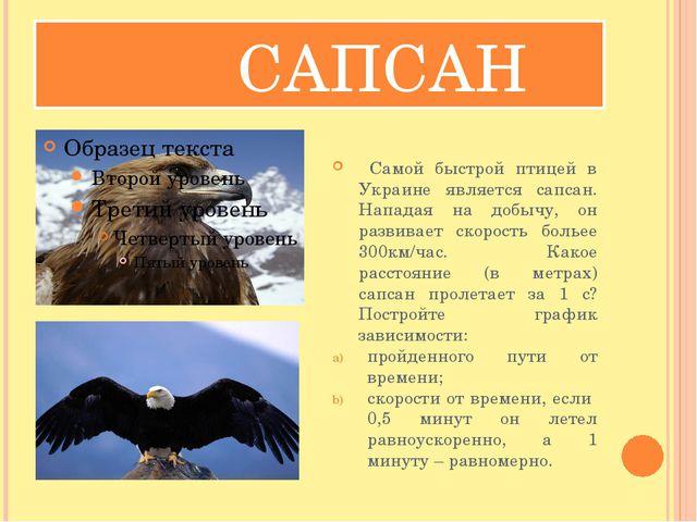 САПСАН Самой быстрой птицей в Украине является сапсан. Нападая на добычу, он...