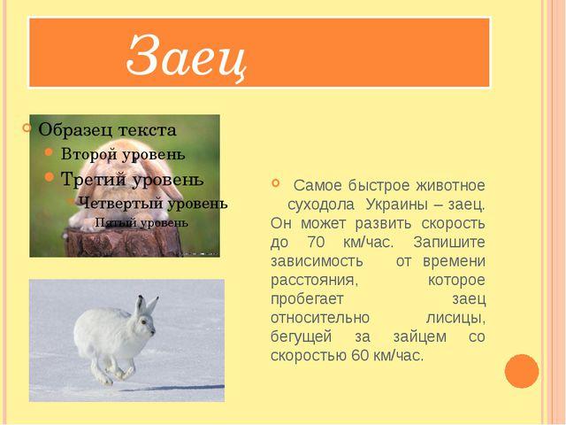 Заец Самое быстрое животное суходола Украины – заец. Он может развить скорос...