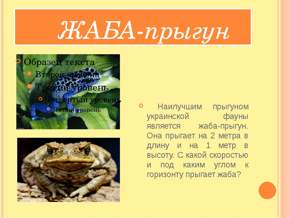 ЖАБА-прыгун Наилучшим прыгуном украинской фауны является жаба-прыгун. Она пр...