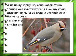 А на нашу кормушку села новая птица *Зимой она чувствует себя в наших краях