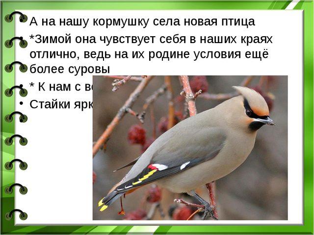 А на нашу кормушку села новая птица *Зимой она чувствует себя в наших краях...