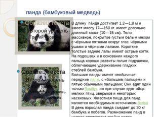 панда (бамбуковый медведь) В длину панда достигает 1,2—1,8м и имеет массу 17