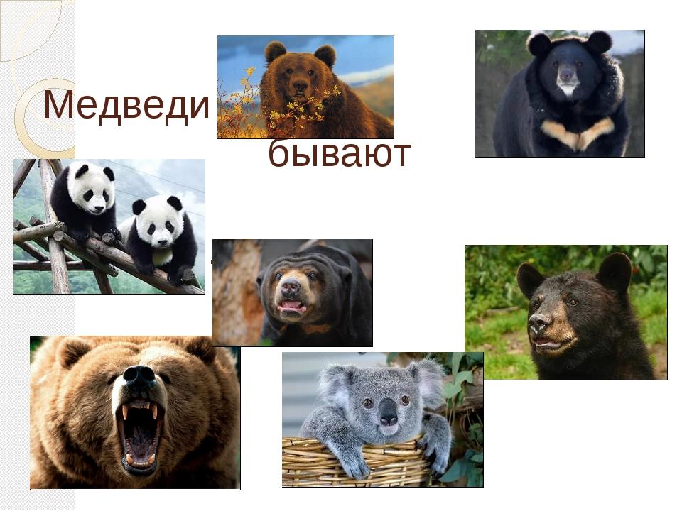 Медведи бывают разные…