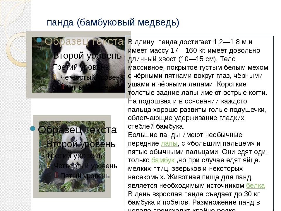 панда (бамбуковый медведь) В длину панда достигает 1,2—1,8м и имеет массу 17...