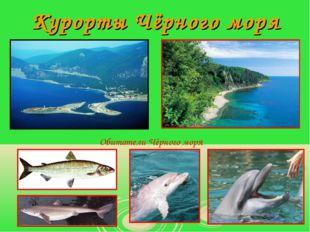 Курорты Чёрного моря Обитатели Чёрного моря