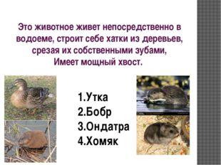 Это животное живет непосредственно в водоеме, строит себе хатки из деревьев,