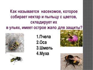 Как называется насекомое, которое собирает нектар и пыльцу с цветов, складиру