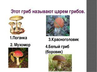 Этот гриб называют царем грибов. 4.Белый гриб (боровик) 1.Поганка 2. Мухомор