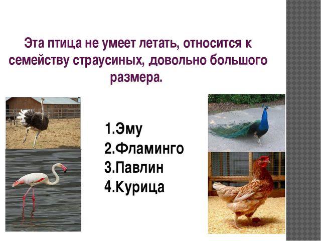 Эта птица не умеет летать, относится к семейству страусиных, довольно большог...