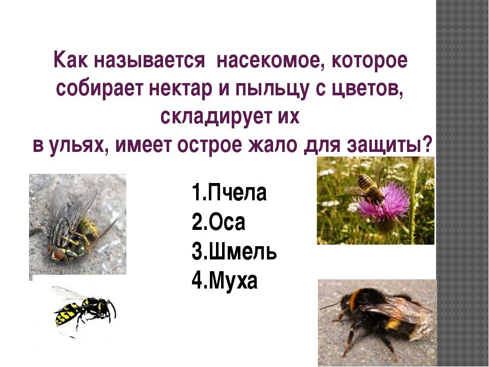 Как называется насекомое, которое собирает нектар и пыльцу с цветов, складиру...