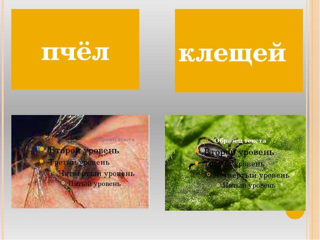 пчёл клещей