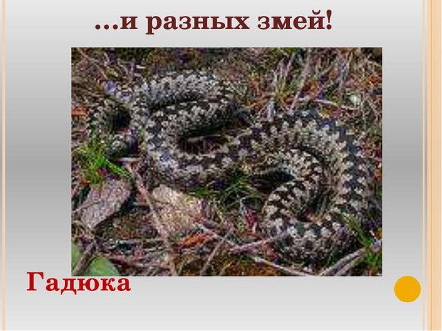 …и разных змей! Гадюка