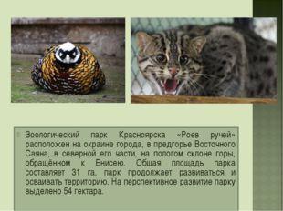 Зоологический парк Красноярска «Роев ручей» расположен на окраине города, в п