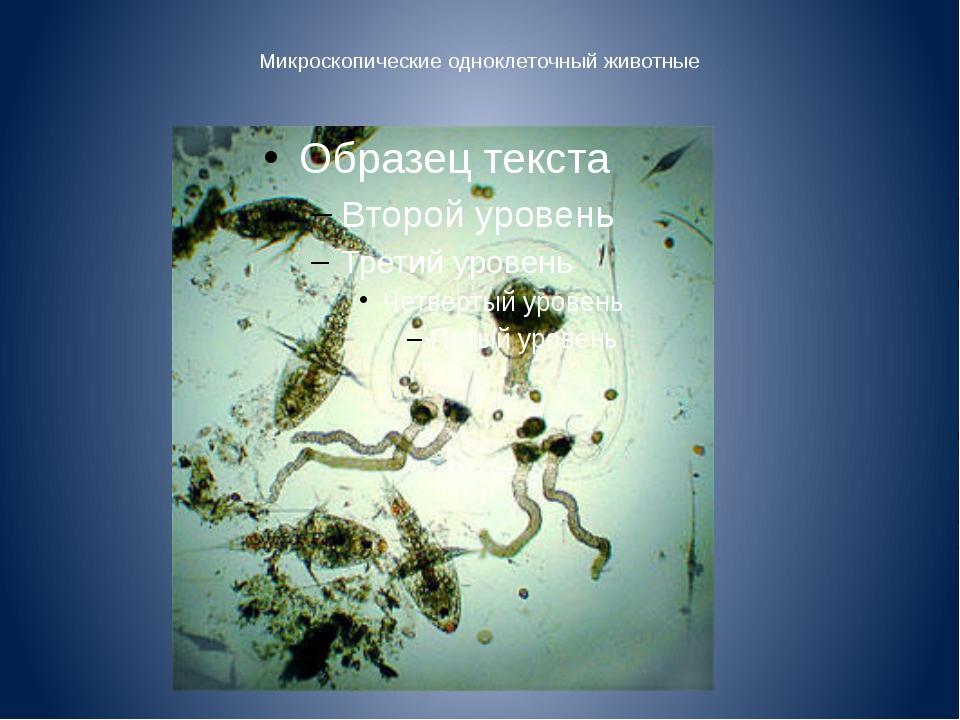 Микроскопические одноклеточный животные