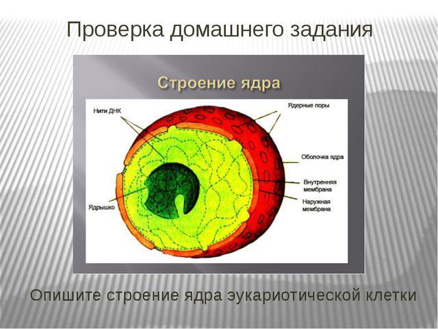 Опишите строение ядра эукариотической клетки Проверка домашнего задания