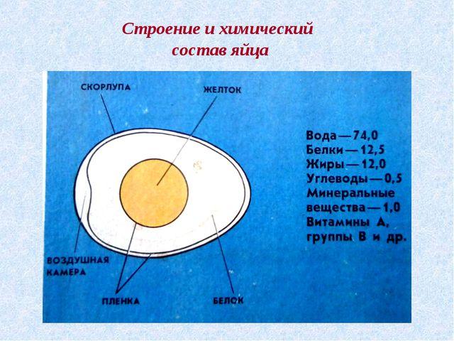 Строение и химический состав яйца