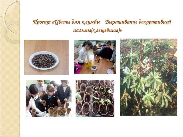 Проект «Цветы для клумбы Выращивание декоративной пальмы(клещевины)»