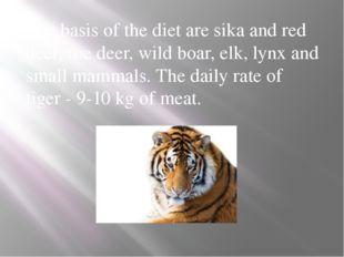 The basis of the diet are sika and red deer, roe deer, wild boar, elk, lynx a