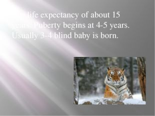 The life expectancy of about 15 years. Puberty begins at 4-5 years. Usually 3