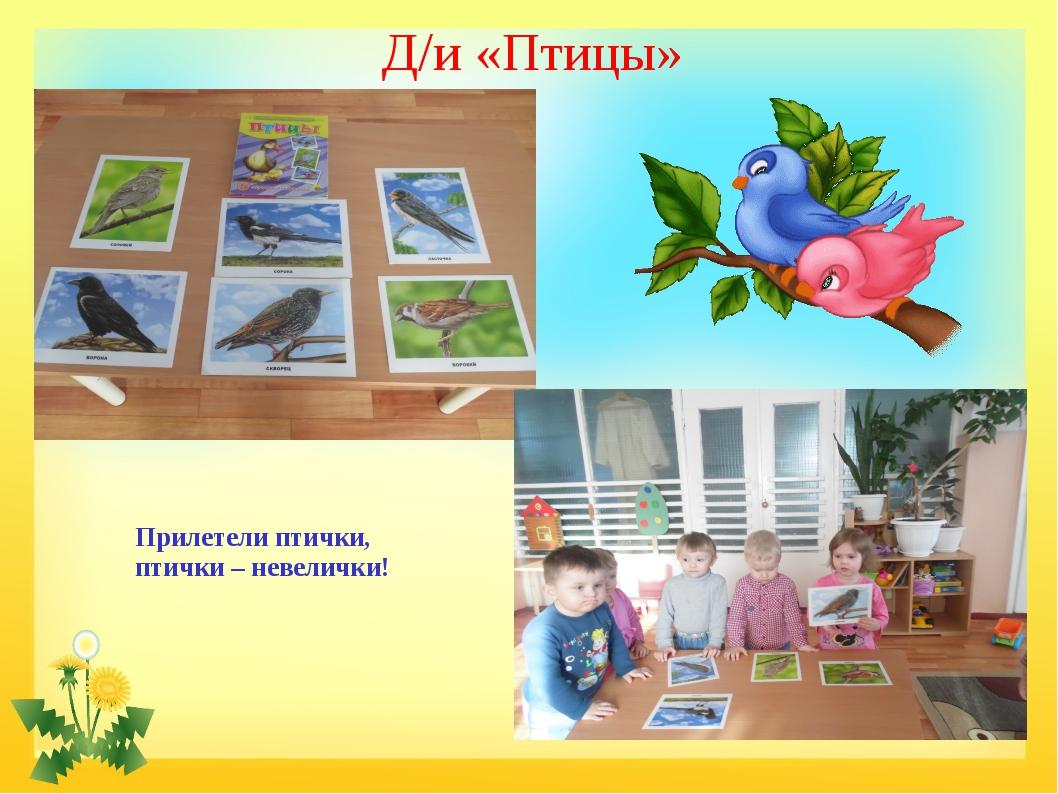 Д/и «Птицы» Прилетели птички, птички – невелички!