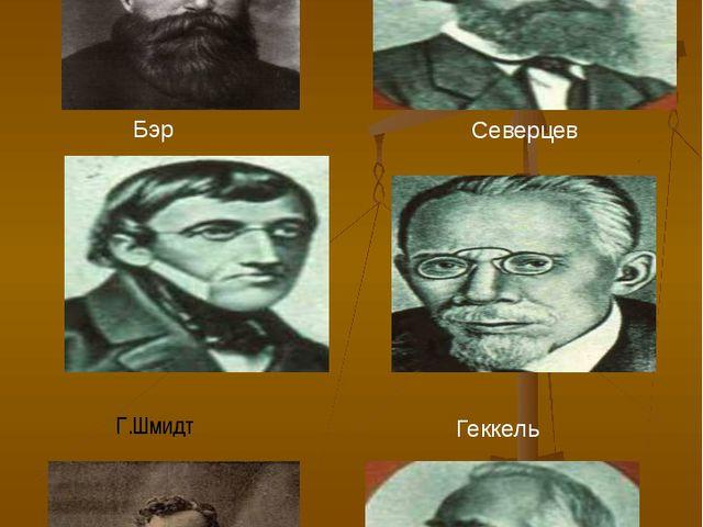Ученные - эмбриологи Мюллер Северцев Бэр Геккель Ковалеский Г.Шмидт