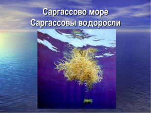 Саргассово море Саргассовы водоросли