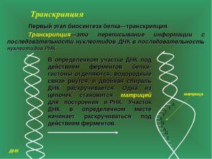 Транскрипция  Первый этап биосинтеза белка—транскрипция. Транскрипция—это