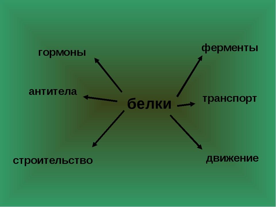 белки транспорт ферменты строительство антитела гормоны движение