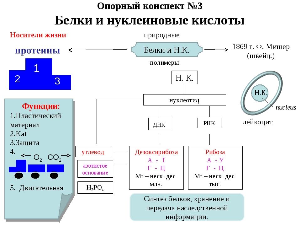 Опорный конспект №3 Белки и нуклеиновые кислоты Носители жизни 1 2 3 Функции:...
