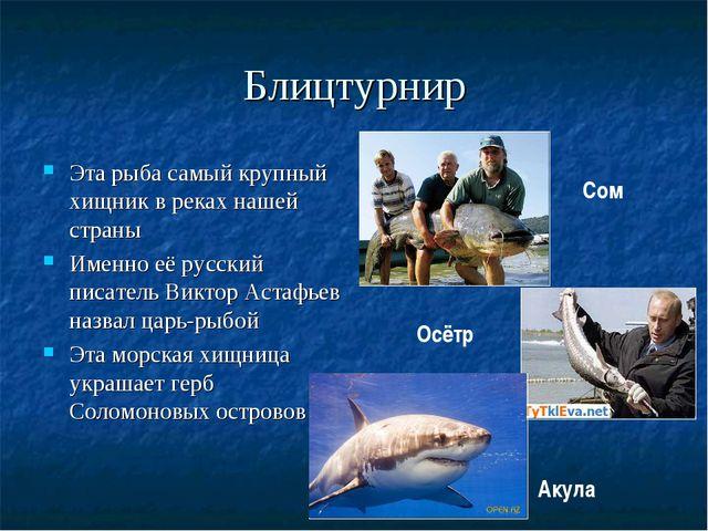 Блицтурнир Эта рыба самый крупный хищник в реках нашей страны Именно её русск...