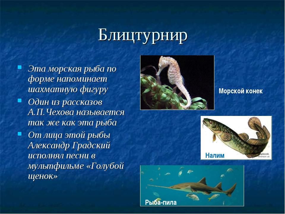 Блицтурнир Эта морская рыба по форме напоминает шахматную фигуру Один из расс...