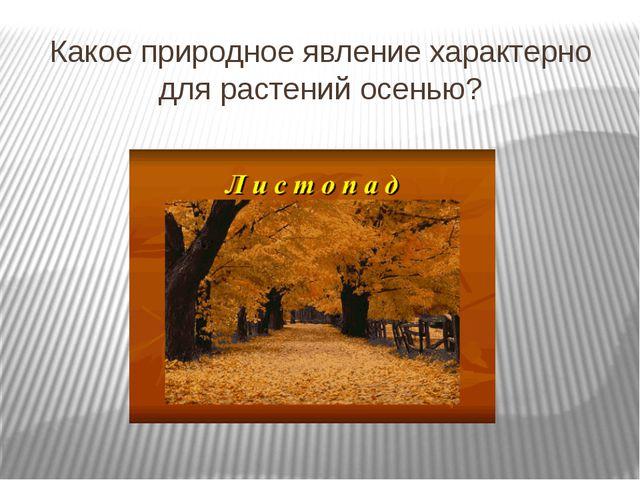 Какое природное явление характерно для растений осенью?