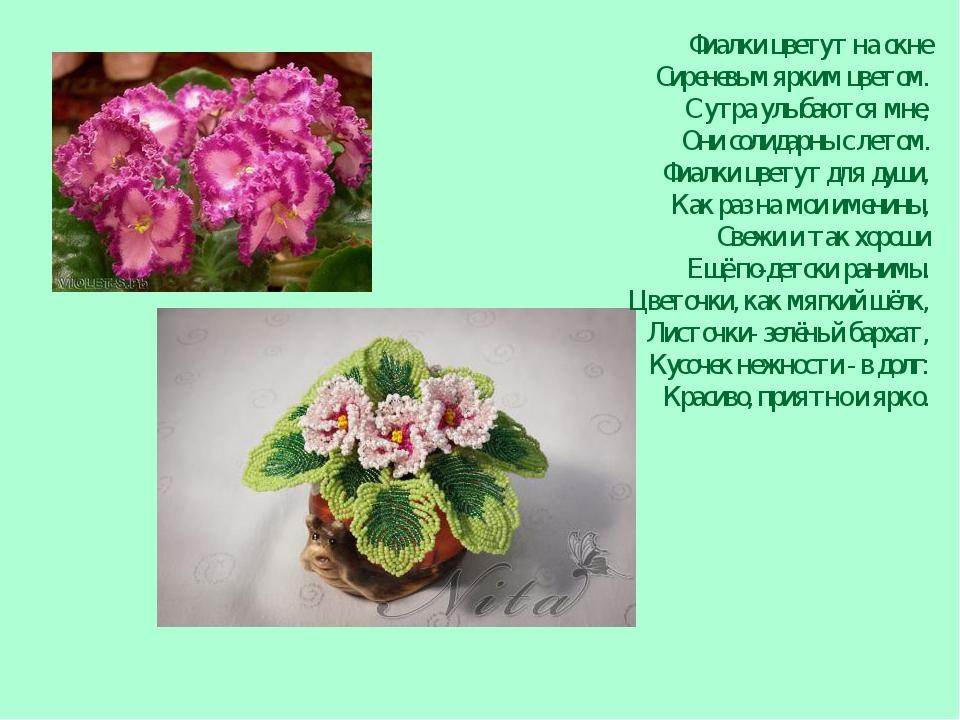 Фиалки цветут на окне Сиреневым ярким цветом. С утра улыбаются мне, Они солид...