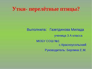 Утки- перелётные птицы? Выполнила: Газетдинова Милада ученица 3 А класса МОБУ