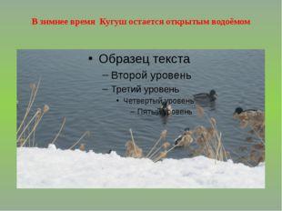 В зимнее время Кугуш остается открытым водоёмом