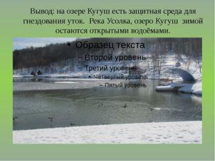 Вывод: на озере Кугуш есть защитная среда для гнездования уток. Река Усолка,