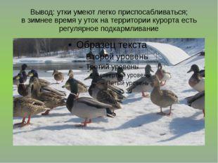 Вывод: утки умеют легко приспосабливаться; в зимнее время у уток на территори