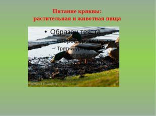 Питание кряквы: растительная и животная пища