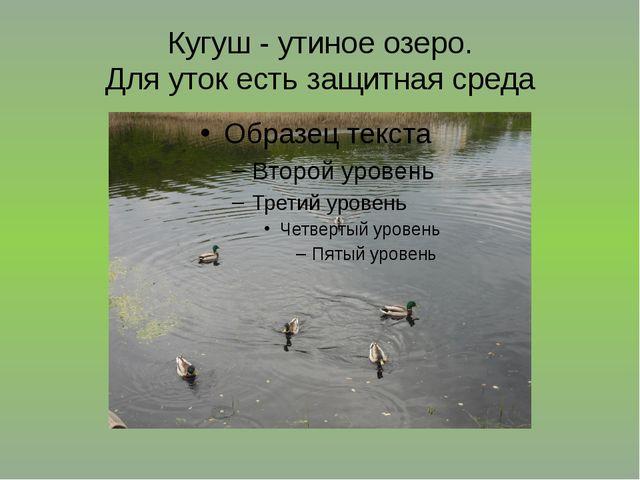 Кугуш - утиное озеро. Для уток есть защитная среда