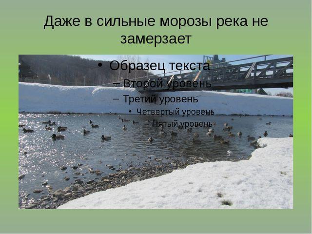 Даже в сильные морозы река не замерзает