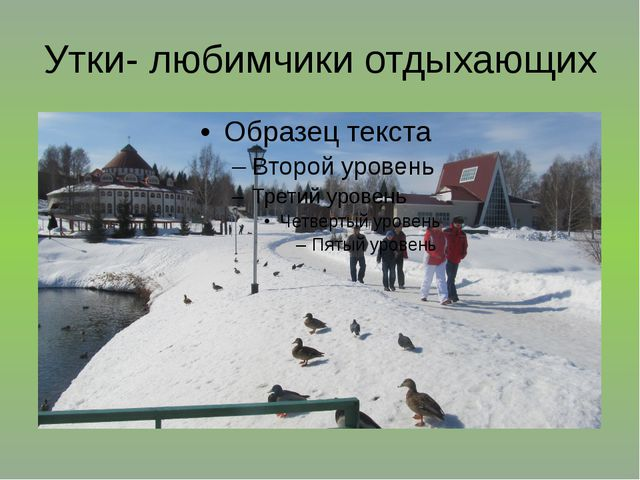 Утки- любимчики отдыхающих