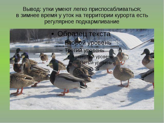 Вывод: утки умеют легко приспосабливаться; в зимнее время у уток на территори...