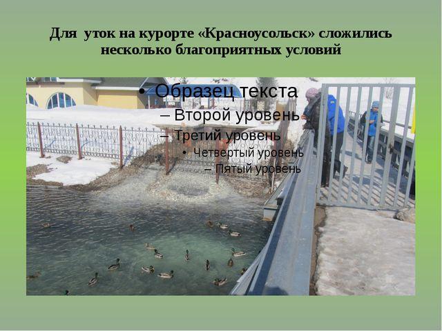 Для уток на курорте «Красноусольск» сложились несколько благоприятных условий