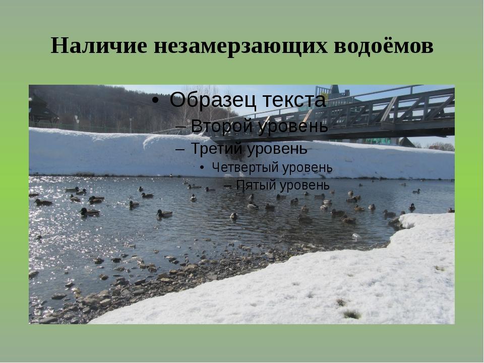 Наличие незамерзающих водоёмов