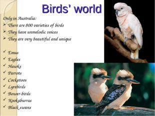 Birds' world Only in Australia: There are 800 varieties of birds They have un