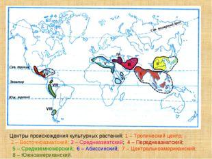 Центры происхождения культурных растений: 1 – Тропический центр; 2 – Восточно