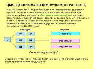 ЦМС (ЦИТОПЛАЗМАТИЧЕСКАЯ МУЖСКАЯ СТЕРИЛЬНОСТЬ) В 1929 г. генетик М.И. Хаджинов