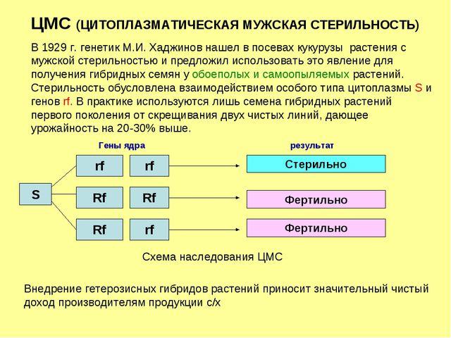 ЦМС (ЦИТОПЛАЗМАТИЧЕСКАЯ МУЖСКАЯ СТЕРИЛЬНОСТЬ) В 1929 г. генетик М.И. Хаджинов...