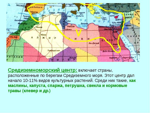 Средиземноморский центр: включает страны, расположенные по берегам Средиземно...
