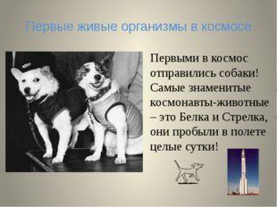 Первые живые организмы в космосе Первыми в космос отправились собаки! Самые з